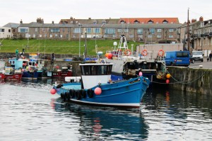 Glad Tidings Farne Island Boat Trip