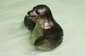 The Scottish Sealife Sanctuary