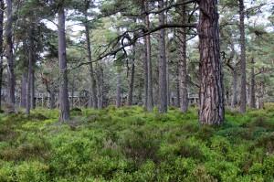 Forest Walk, Landmark Forest Adventure Park
