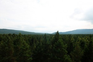 View from the Fire Tower, Landmark Forest Adventure Park