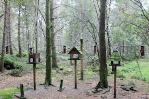 Red Squirrels, Landmark Forest Adventure Park
