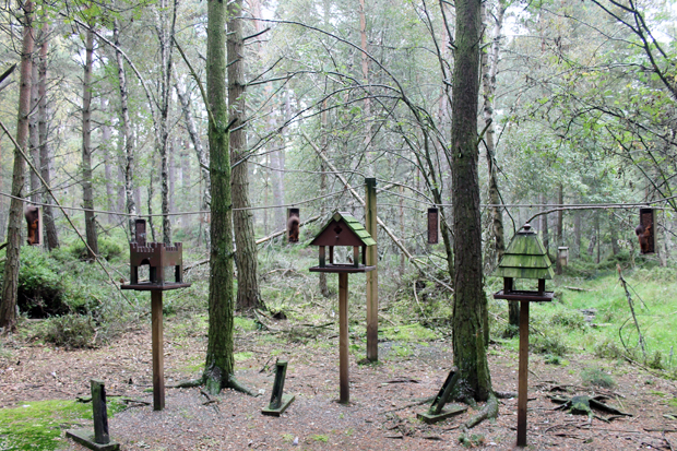Red Squirrels, Landmark Forest Adventure Park