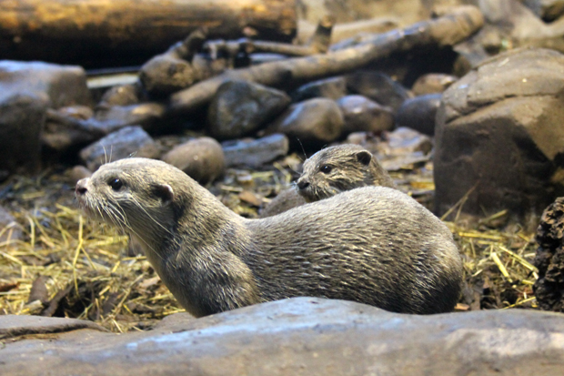 Otters at Lakes Aquarium