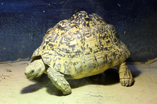 Tortoise at Lakes Aquarium