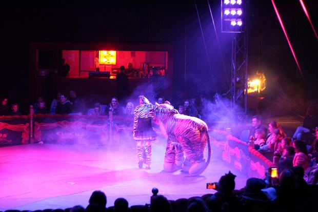 Big Kid Circus Cat