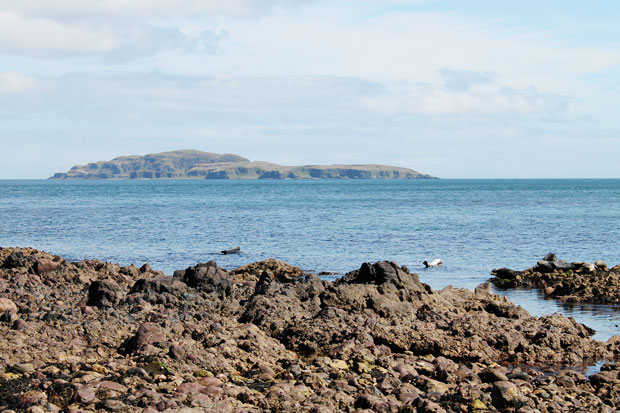 Seals on Keil Shore