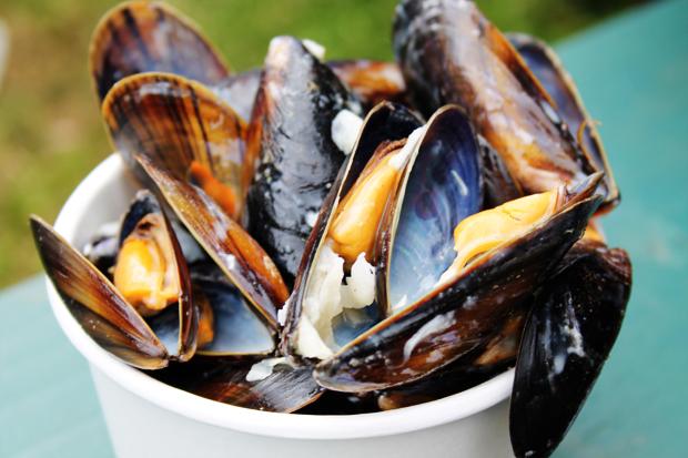 Loch Fyne Mussels, Belladrum Tartan Heart Festival
