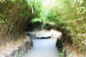 Bamboo Labyrinth, The Alnwick Garden