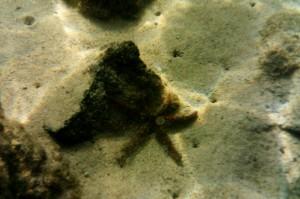 Starfish, Lanzarote