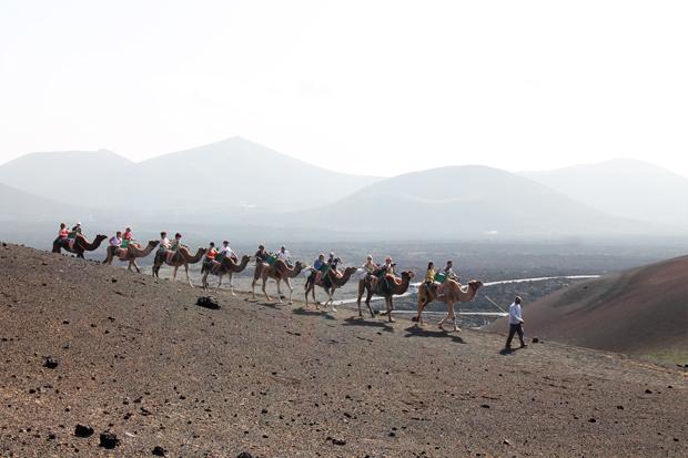 Camel Rides, Timanfaya National Park, Lanzarote