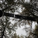 Go Ape at Whinlatter Forest and The Proclaimers