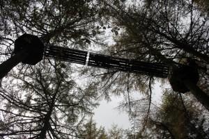 Tunnel, Go Ape, Whinlatter Forest