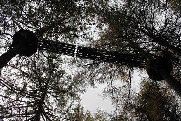 Tunnel, Go Ape, Whinlatter Forest