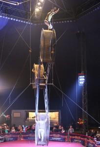 Wheel of Death, Big Kid Circus