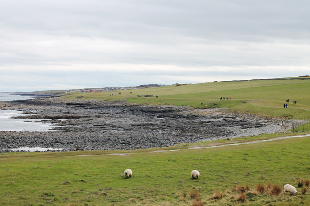 Craster from Dunstanburgh Castle